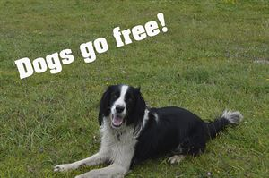 Dogs go free in static caravans this Easter