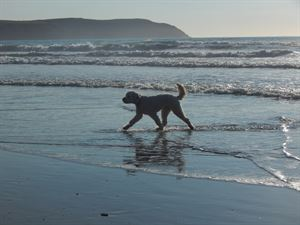 Dog friendly beaches: Woolacombe Bay beach