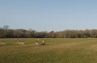 Long Meadow Campsite (New Forest Agricultural Showground)