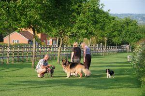 A dog friendly site
