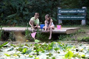 Children can explore the ponds