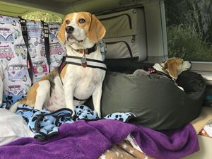 Bryher and Tean in their California campervan