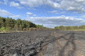 Burnt heathland at Brentmoor Heath ©Surrey Wildlife Trust