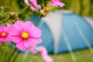 Floral plantings add colour to the touring park