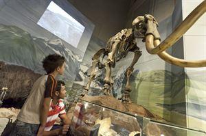 Cardiff Museum, image: VisitBritain/Simon Winnall