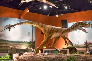 Dinosaur Isle. Image: VisitEngland/Dinosaur Isle