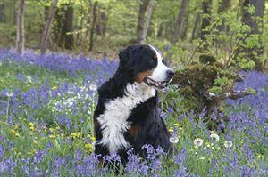 Dog-friendly sites. Image: Pixabay