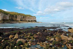 Flamborough Cliffs