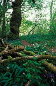 Green Castle Wood