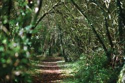 Hedley Wood, Devon