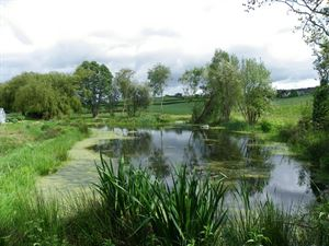 The on-site pond