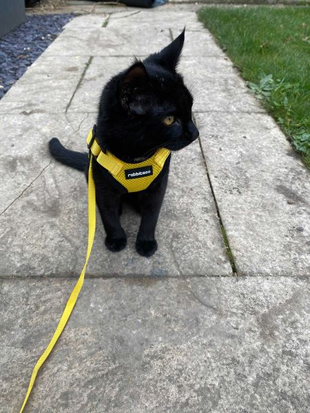 The MMM deputy editor's cat, Cable, is getting used to life outdoors