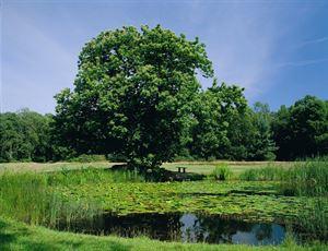 The Upper Pond at Kelling Heath Holiday Park