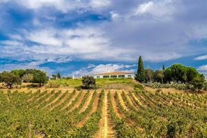 One of the vineyards that is part of the stopover scheme