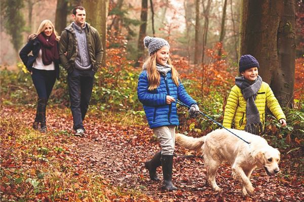 Dog walking in the woods!