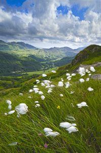 Hafod y Llan, Wales