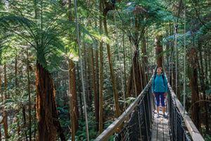 The Redwoods Treewalk, Rotorua
