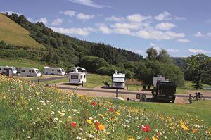 Red Kite, Powys