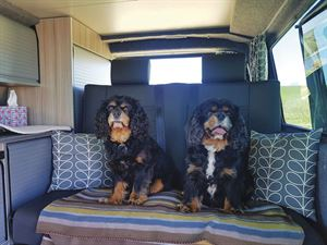 Rusty and Jasper, the latest Paws on tour competition winners
