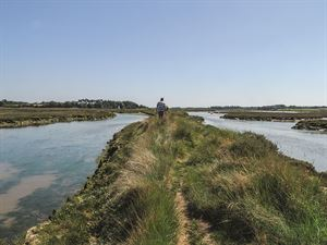 Salt marshes on the Deben near Waldringfield