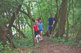 Woodland-walks-a-favourite-family-pastime.-Image-Willerby-16570.jpg