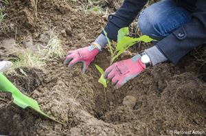 Planting a tree © Reforest'Action