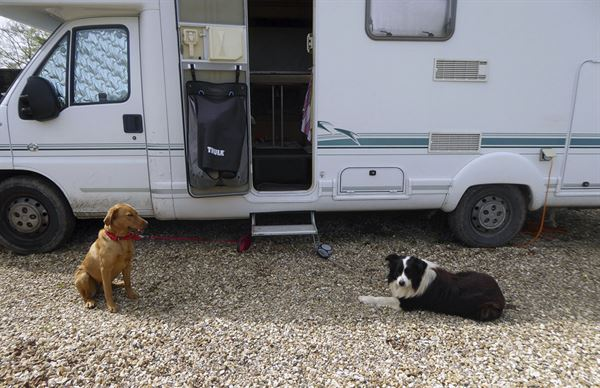 Travelling with dogs in a motorhome or campervan can be challenging