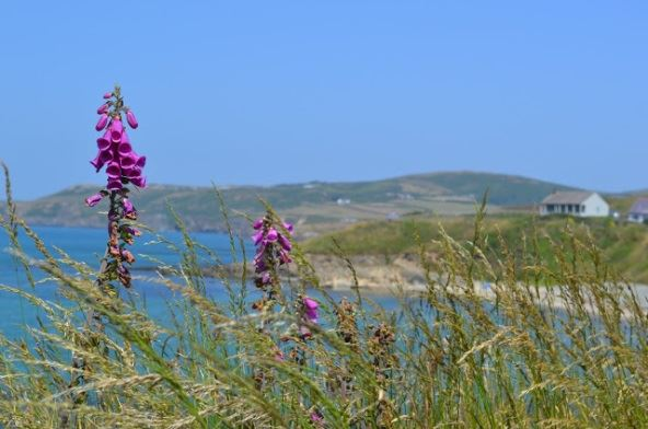 Where to Camp in Anglesey