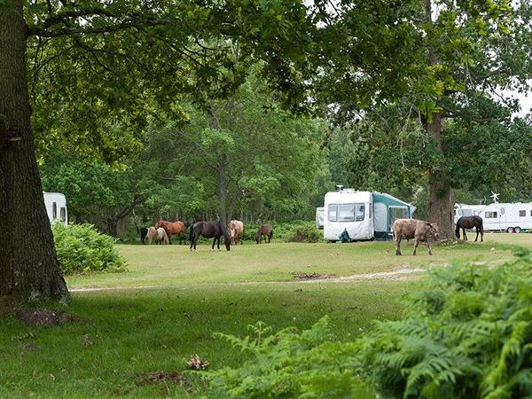 Pitch among the trees and ponies