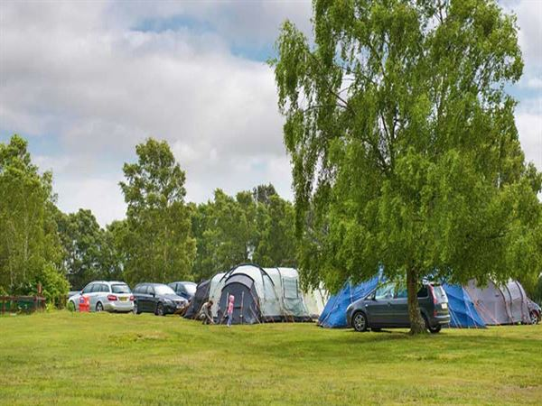 Holmsley is a great site for motorhomes caravans and tents & Campsites in Dorset - Christchurch - Holmsley Camping in the ...