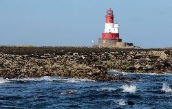 Lighthouse and seals on the Farne Islands