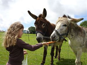 Kids will enjoy making friends with the many animals on site