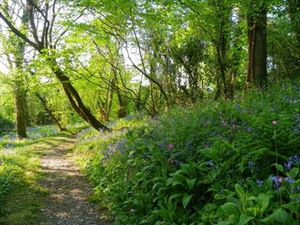Enjoy relaxing walks through the site's own woodland