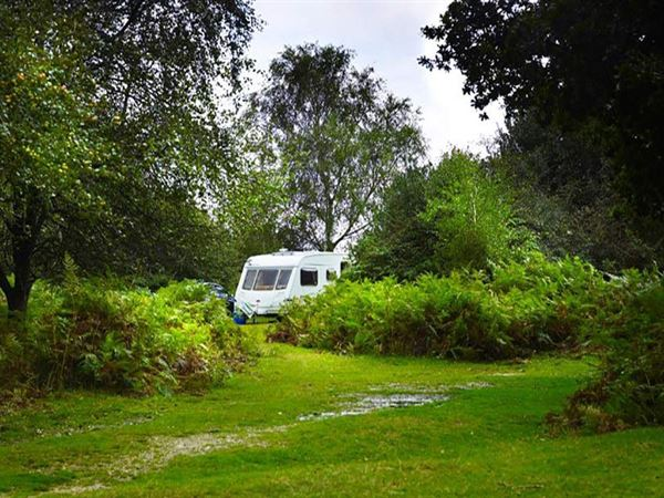 A perfect setting within the New Forest