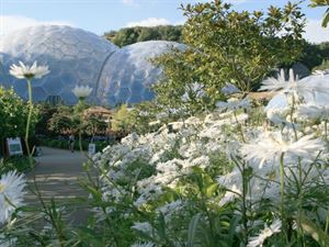 The Eden project is one of Cornwalls best attractions with good reason