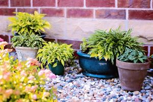Get out in the garden and pot some plants