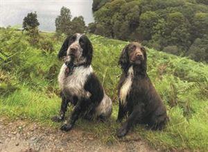 Best UK Dog Walks