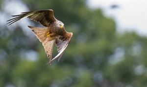 Red Kite Touring Park