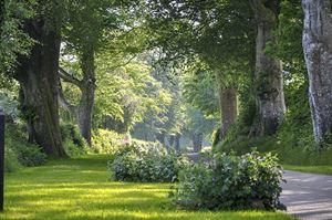 Woodovis walking path (photo courtesy of Premier Parks)