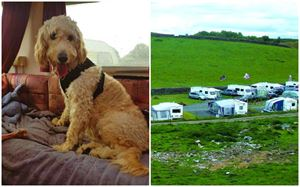 Paws on tour: Caravanning fun for furry four-legged friends!