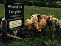Woodyhyde Campsite