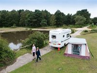 Roundhill Camping in the Forest Site New Forest