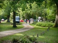 Hollands Wood Camping in the Forest Site New Forest