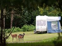 Longbeech Camping in the Forest Site New Forest