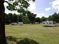 Matley Wood Camping in the Forest Site New Forest