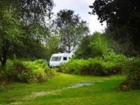 Ocknell Camping in the Forest Site New Forest